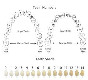 Teeth Numbers & Shade